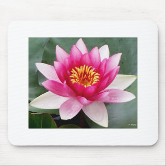 Aggelikis Pink Waterlilly Design Mouse Pad