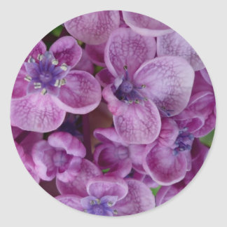 Aggelikis Purple Flowers Design Classic Round Sticker
