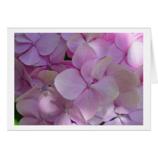 Aggelikis Soft Pink Hydrangea Flower Card