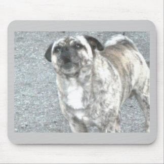 Aggravated Barking Bulldog Mouse Pad