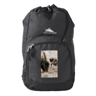 Aggressive wolf hunting bison backpack