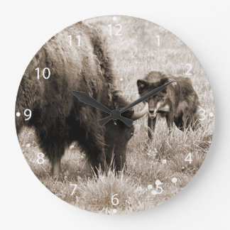 Aggressive wolf hunting bison large clock