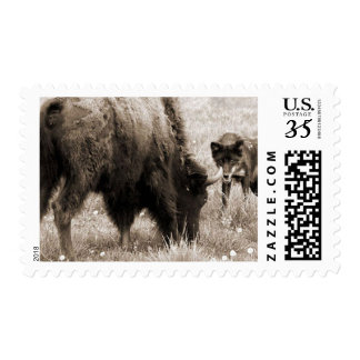 Aggressive wolf hunting bison postage