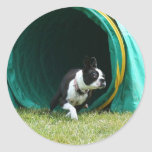 Agilidad Boston Terrier Etiqueta Redonda