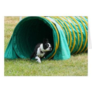 Agilidad Boston Terrier Notecard Tarjeta Pequeña