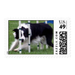 Agility Border Collie Weaving Postage