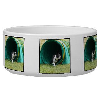 Agility Boston terrier Bowl