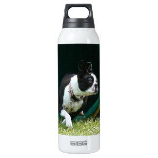Agility Boston terrier 16 Oz Insulated SIGG Thermos Water Bottle