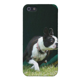 Agility Boston Terrier Speck Case Cases For iPhone 5