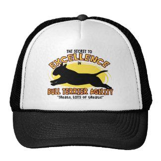 Agility Bull Terrier Secret Hat
