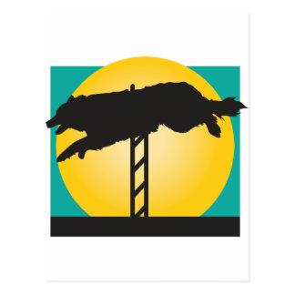 Agility Dog Postcard