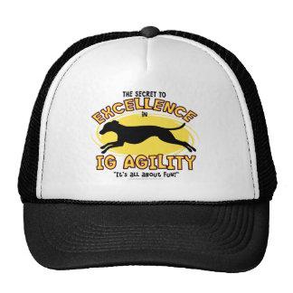 Agility Italian Greyhound Secret Hat