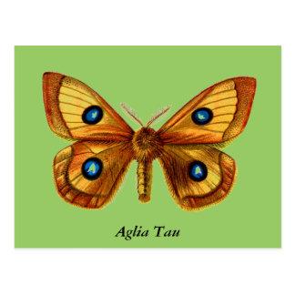 Aglia Tau Butterfly Postcards