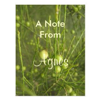 Agnes Gift Postcard