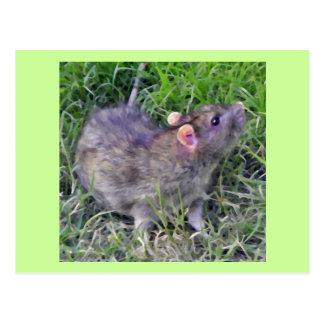 Agouti pet rat postcard.