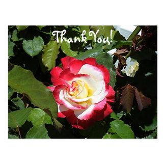 Agradezca alguien con una isla inclinada rojo del tarjetas postales