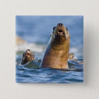 Agressive Stellar Sea Lions Eumetopias Pinback Button