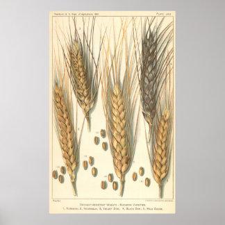 Agricultura del vintage, planta resistente a la se poster