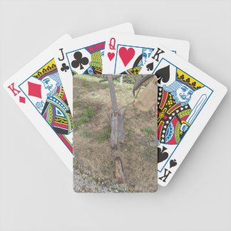 Agricultural old wooden plow on the ground bicycle playing cards