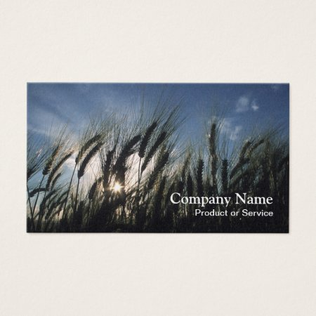 Barley Field Business Cards