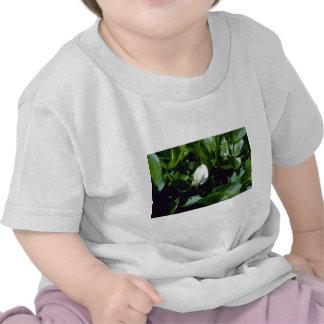 Agua-Arum amarillo (cala Palustris Var. Polysthace Camisetas