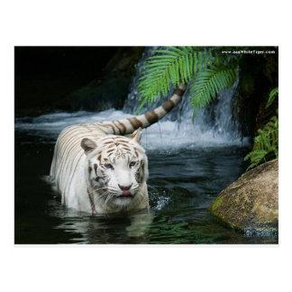 Agua blanca del tigre postal