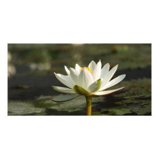Agua blanca hermosa que emerge de una charca tarjetas fotograficas