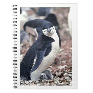 Agua blanca negra animal linda del pájaro del ping