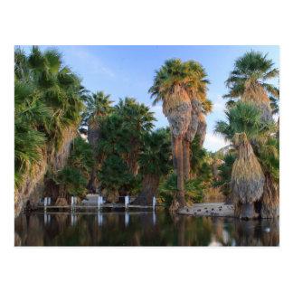 Agua Caliente Park Postcard