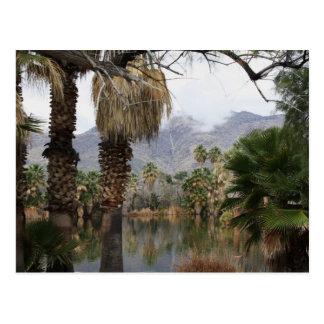 Agua Caliente Park Tucson Az Postcard