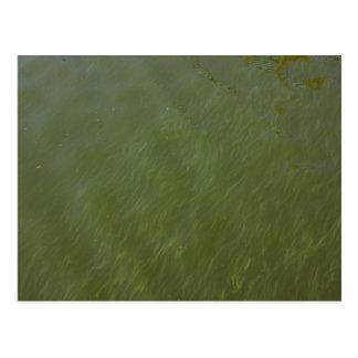 Agua, cerca de la orilla tarjetas postales