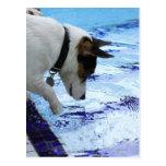 Agua conmovedora del perro en la piscina postal