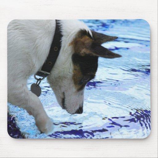 Agua conmovedora del perro en la piscina tapetes de raton