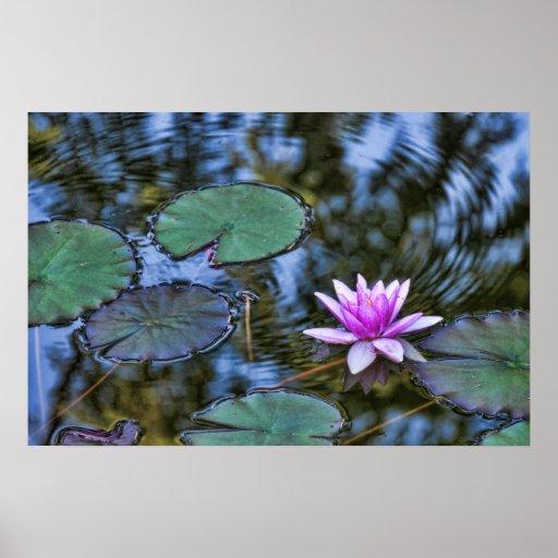 Agua de ondulación Lilypad hermoso en jardín itali Poster