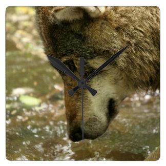 Agua de Pawing del lobo Reloj Cuadrado