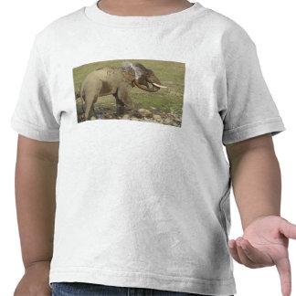 Agua de rociadura del elefante indio/asiático, camisetas