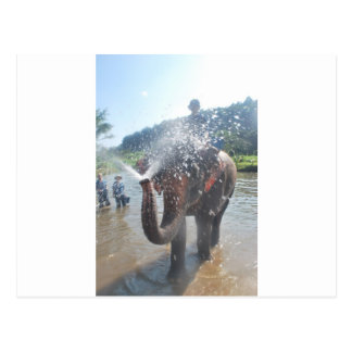 Agua de rociadura del elefante postal