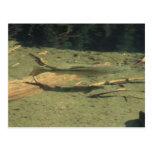 Agua del animal de las plantas acuáticas de Yolly Postal