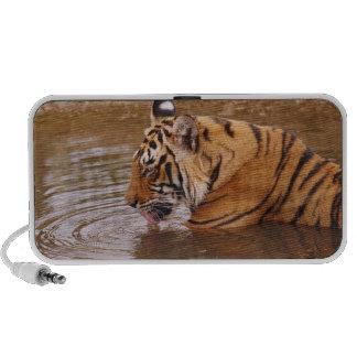 Agua drnking real del tigre de Bengala en la selva PC Altavoces