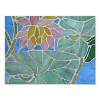 Agua Lillies Fotografias