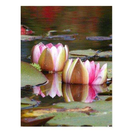 Agua Lillies Tarjeta Postal