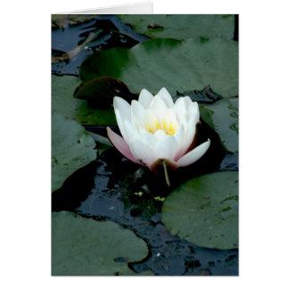 agua lilly tarjeta de felicitación