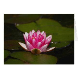 Agua lilly y cojines tarjeta de felicitación