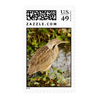 Agua madre de salmuera americana - imagen cosida sellos
