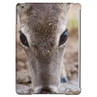 agua potable Blanco-atada de los ciervos