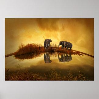 Agua potable de la familia del elefante posters