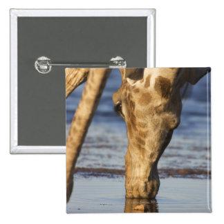 Agua potable de la jirafa (Giraffa Camelopardalis) Pins