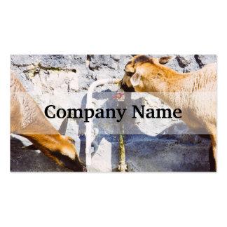 Agua potable de las cabras, fotografía animal tarjeta de visita