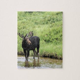 Agua potable de los alces jovenes del toro en una  rompecabeza