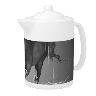 Agua potable del caballo hermoso